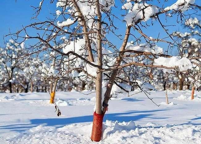 Зимовка и защита от грызунов