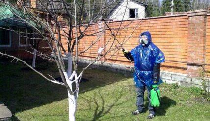 Когда и как правильно обработать яблоню от вредителей