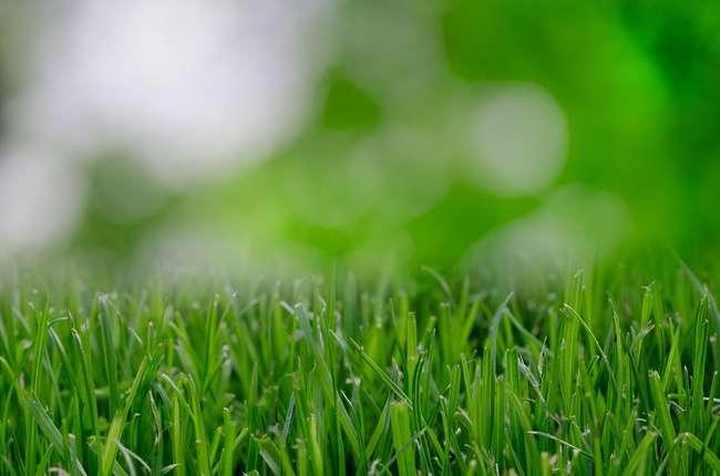 Азот Для газона