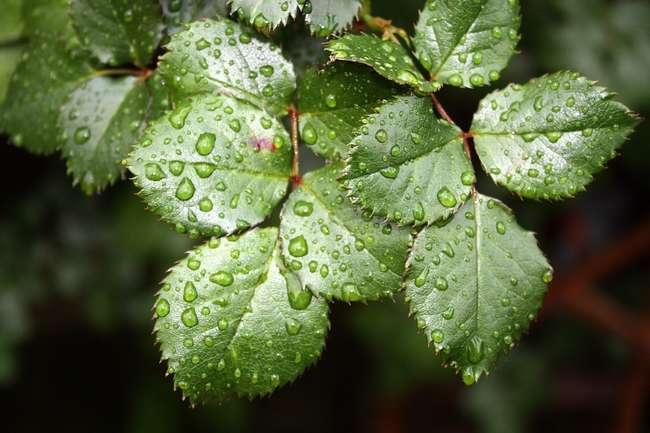 Для чего растениям нужен азот