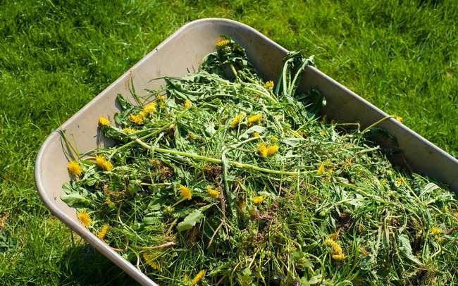 Что такое зеленое удобрение